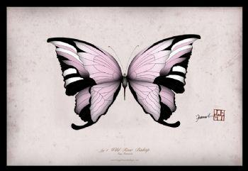 Wild Rose Bishop - signed print